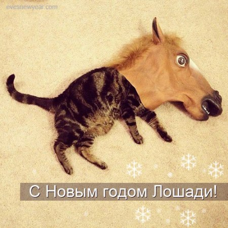 kot_lohad
