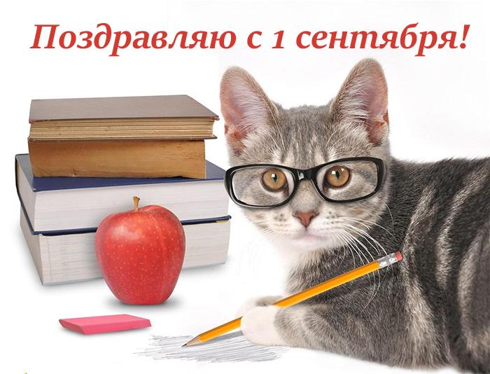 1 приколы котами с