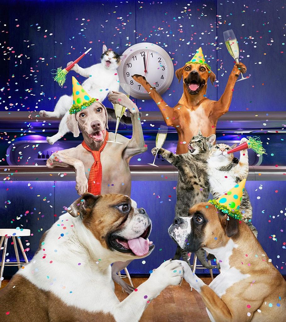 Новогоднее застолье. Прикольная картинка где собачки и котик празднуют Новый год собаки)))