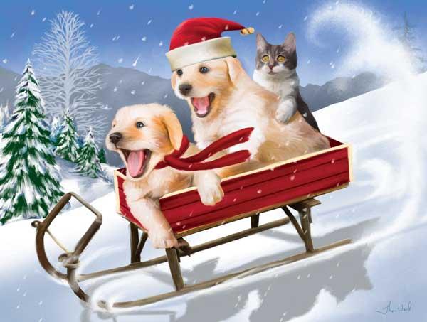Красивая новогодняя картинка, две собаки и офигевший котэ на санках.